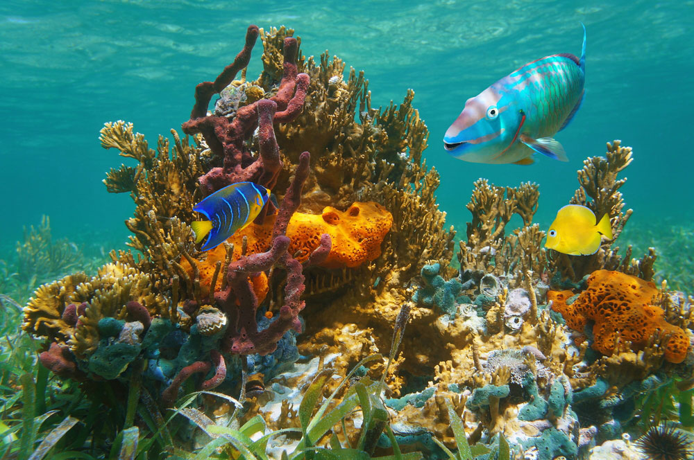Dive Shops, Dive Resorts, Scuba Dive
