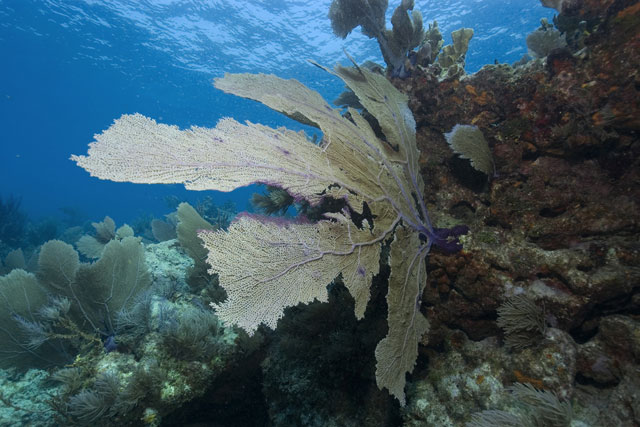 Key Largo diving & snorkeling